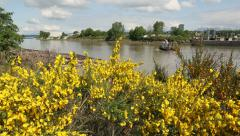 Fraser River Scotch Broom and Tugboat Stock Footage