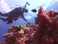 Ocean scenery beautiful, colourful reef, on very shallow reef and surface, Stock Footage