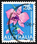 Stock Photo of Postage stamp Australia 1968 Cooktown Orchid, Queensland, State
