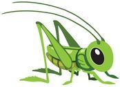 Grasshopper Stock Illustration