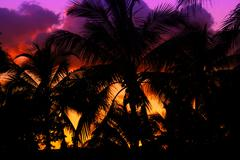palmtrees silhouette on sunset in tropic - stock photo