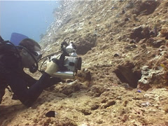 Videographer on dead reef with Yellow edged moray in Fiji Islands, UP11677 Stock Footage