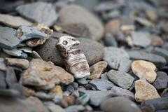 Idol shaped peace of wood found on a sea shore in hvammstangi, iceland Stock Photos
