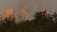 Bushfire on the Heath in the Netherlands Stock Footage