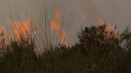 Stock Video Footage of Bushfire on the Heath in the Netherlands