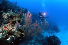 Musta koralli, Florida Keys National Marine Sanctuary Kuvituskuvat
