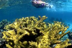 Elkhorn koralli, Florida Keys National Marine Sanctuary Kuvituskuvat