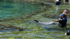 Bathing with dolphins in the artificial lake. Discovery Cove, Orlando, USA. Stock Footage