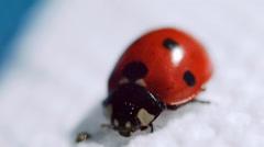 Ladybug on a white rag Stock Footage