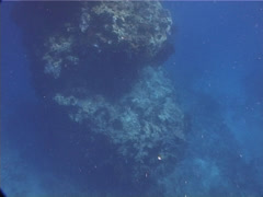 Stock Video Footage of Ocean scenery dives on top of interesting and amazing bommie, a favourite for