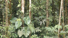 Interior of tropical rainforest during an afternoon shower time-lapse. Stock Footage