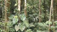 Stock Video Footage of Interior of tropical rainforest during an afternoon shower time-lapse.
