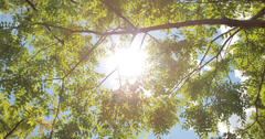 Sunlight through tree branches 4k Stock Footage