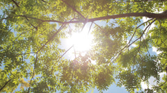 Sunlight through tree branches - stock footage