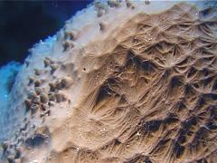 Sponge, Unidentified species, UP13086 Stock Footage