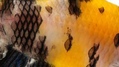 Lähikuva kalan iholla Kuvituskuvat