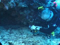 Stock Video Footage of White-spotted grouper hiding in overhang, Epinephelus coeruleopunctatus, UP1399