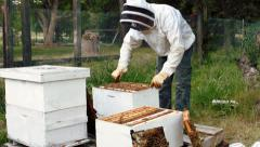 beekeeper to take care of bees - stock footage