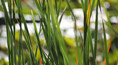 Swaying grass - stock footage