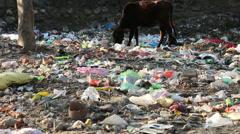 Rishikesh-Garbage Stock Footage