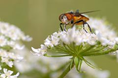 Fly on white flower - stock photo