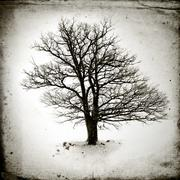 lone tree without leaves - stock photo