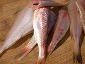 Stock Photo of Hake and red mullet fish