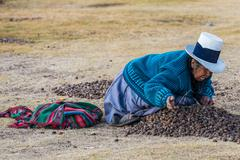 Woman collecting moraya  chincheros town peruvian andes  cuzco peru Stock Photos