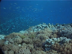 Ocean scenery on planktivore zone, UP1880 Stock Footage