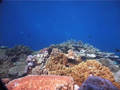 Ocean scenery on shallow coral reef, UP1891 Stock Footage