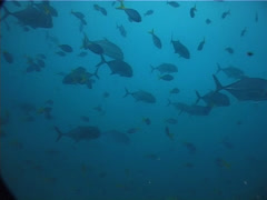 Ocean scenery in bluewater, UP2073 Stock Footage