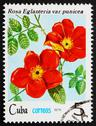 Stock Photo of Postage stamp Cuba 1979 Rose, Rosa Eglanteria Punicea