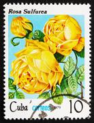 Postage stamp Cuba 1979 Rose, Rosa Rosa Sulfurea - stock photo