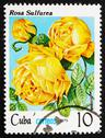 Stock Photo of Postage stamp Cuba 1979 Rose, Rosa Rosa Sulfurea