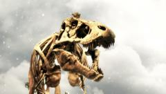 Tyrannosaurus Rex skeleton roars at camera Stock Footage