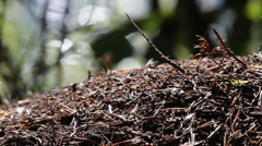 Anthill in front of a lake Stock Footage