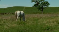 Kansas Flint Hills horse grazing green pasture 1 Stock Footage