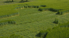 AERIAL: Crop circles, Wheat field Stock Footage