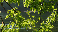 Spring on the Chattahoochee River 02 in HD 4K Stock Footage