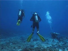 Group of scuba divers swimming on deep coral rubble with Hogfish in Mexico, Stock Footage