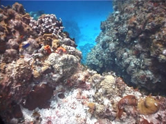 Divemaster leading eager divers swimming on shallow coral reef in Mexico, UP2916 Stock Footage