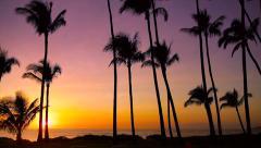 Täydellinen Hawaii Sunset, Palm Trees Arkistovideo