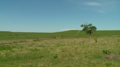 Kansas Flint Hills green pasture wide shot pan Stock Footage