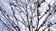Pigeons landing on a tree Stock Footage