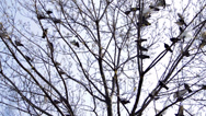 Pigeons landing on a tree Stock Footage