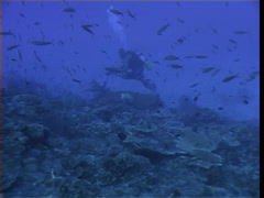 Videographer swimming on deep coral reef with Silvertip shark in Papua New Stock Footage