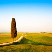 Tuscany, lonely cypress tree and rural road. siena, orcia valley, italy. Stock Photos