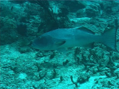 Fish | Groupers | Coral Trout | Tracking Stock Footage