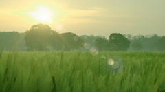Agriculture farming green fields natural background Stock Footage