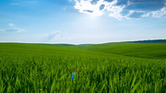 Wind in grass and blue sky Stock Footage